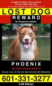 Phoenix  8